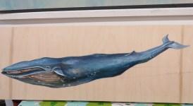 kaths-canon-september-30-2015-rumble-blue-whale-blue-jay-051