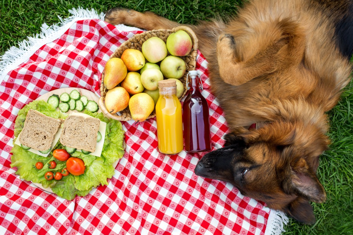 What Can German Shepherds Eat