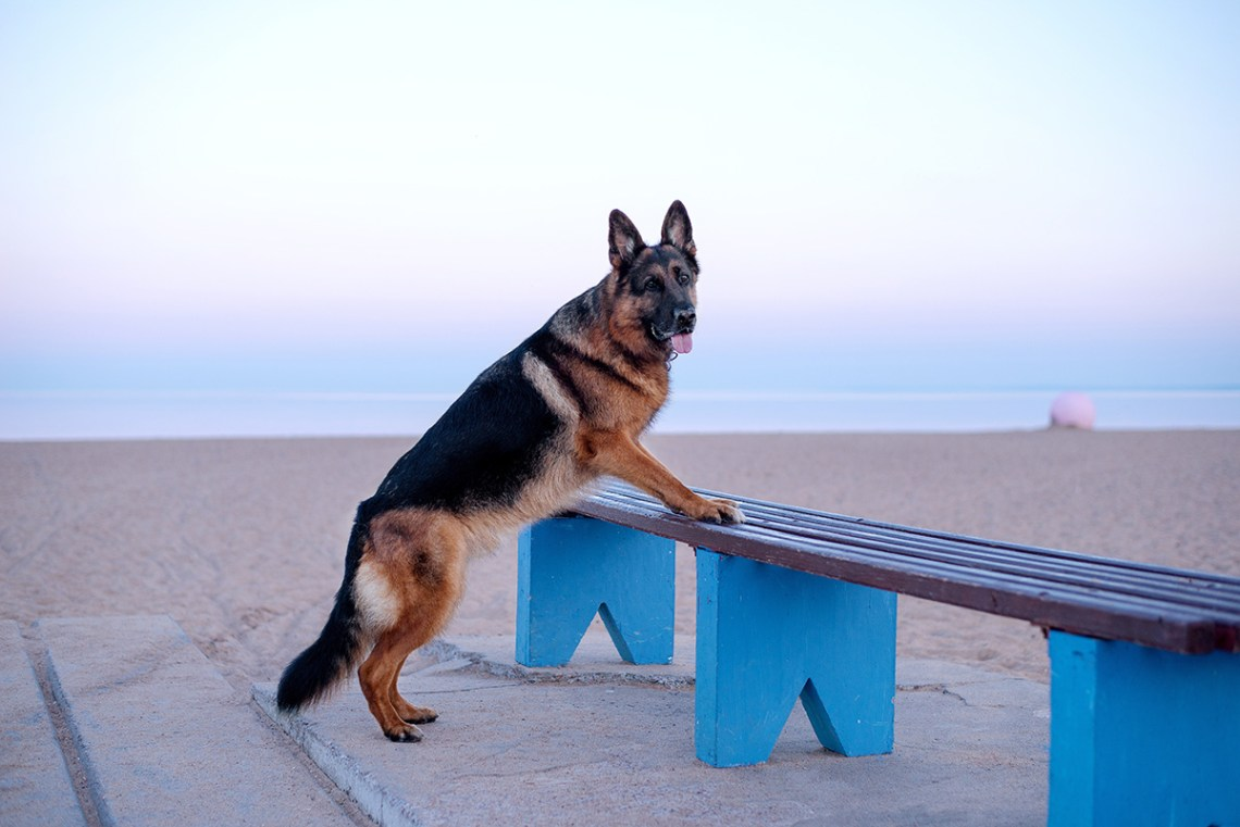 Dog Friendly Places To Go