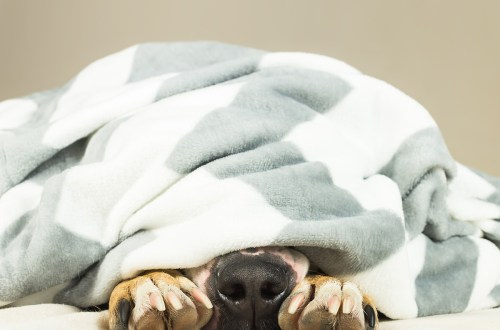 Dog Sleeping Positions Meanings