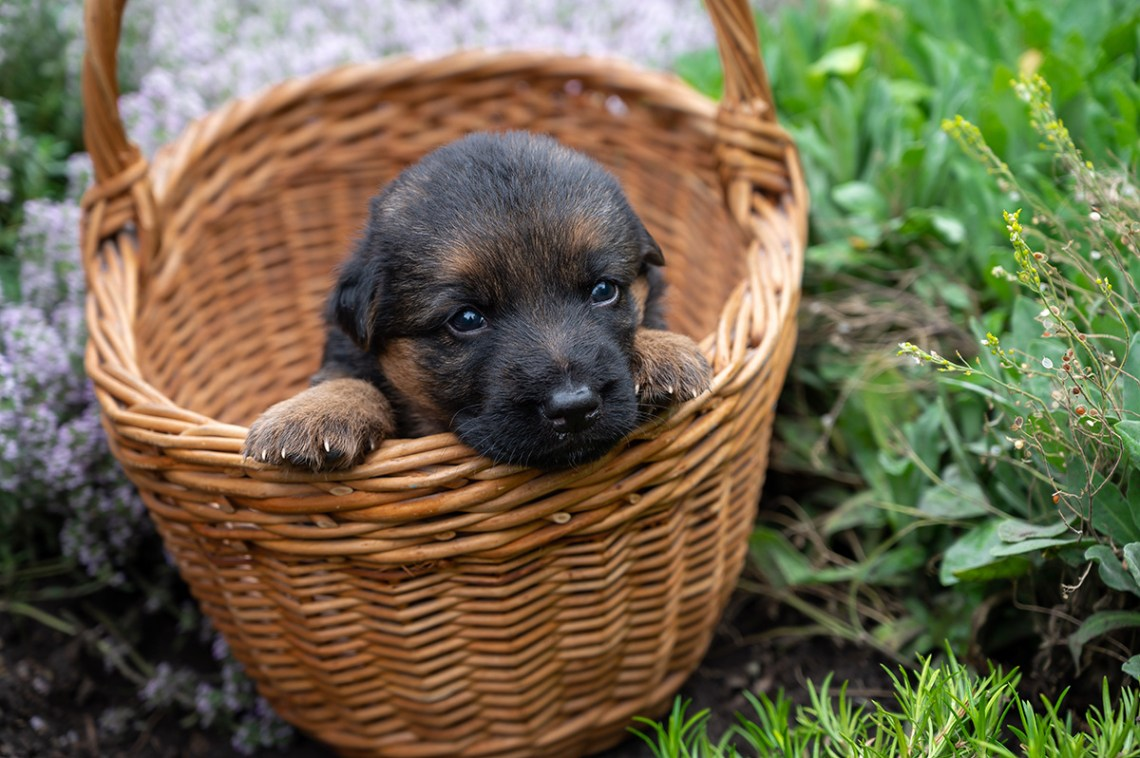 How To Prepare For Puppy Checklist and Guide