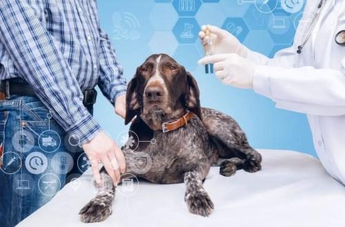 Scientific Dog Studies