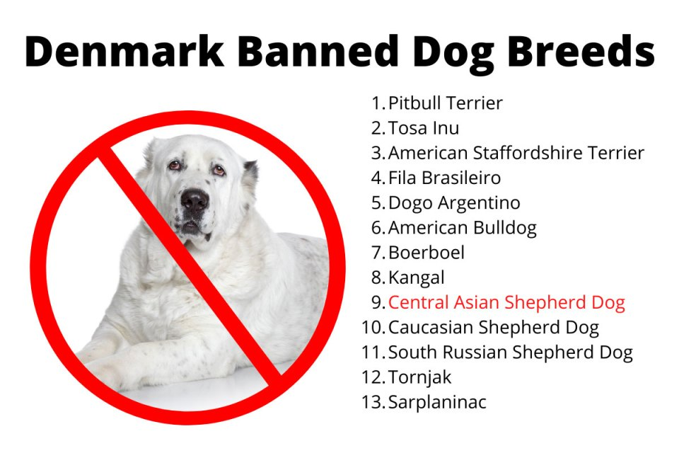 Denmark Banned Dog Breeds Ovtcharka