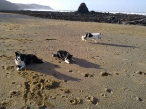 Nearby Dog Friendly Beaches