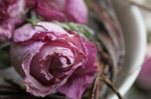 dried roses-SMALL