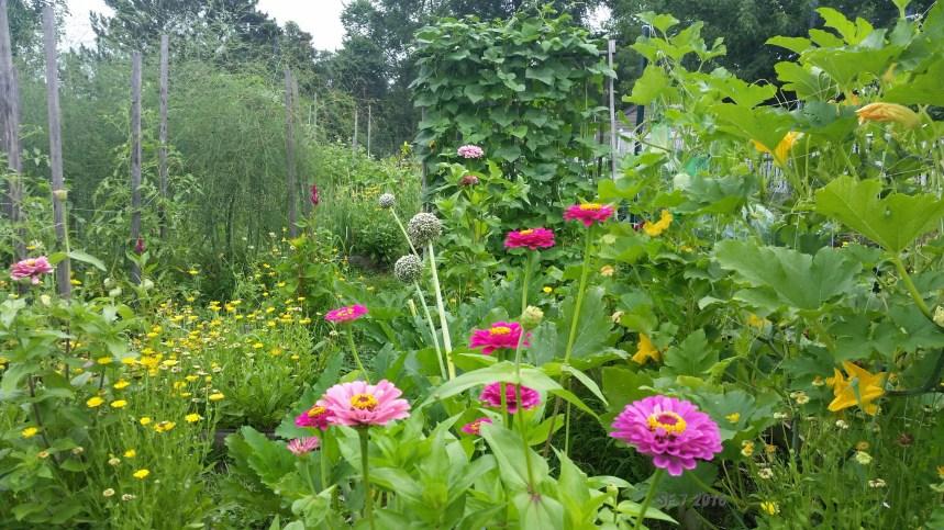 Summer Hilltop Garden