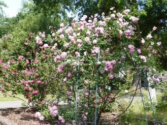 Easter in the Rose Garden 103