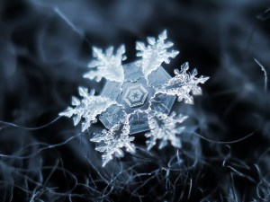 A Special Snowflake. By Flickr user Alexey Kljatov