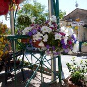Floral colour in the village