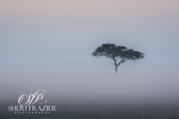Fog on the Mara | Sheri Frazier Photography