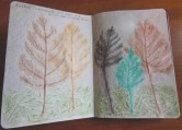 Rubbings of Cottonwood leaves and moss
