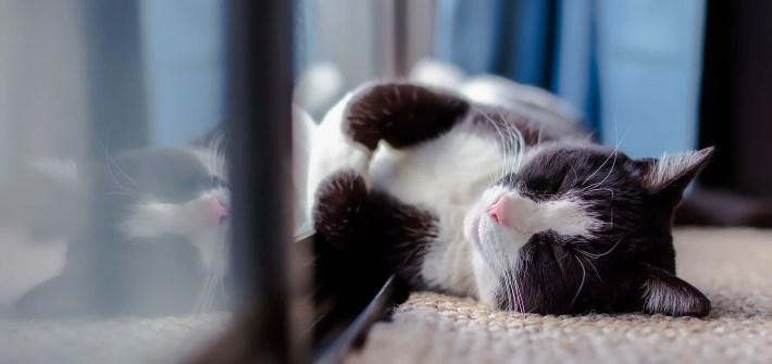 Pausing Feline