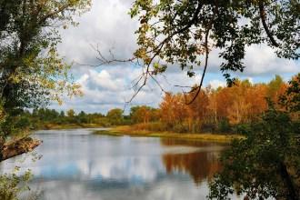 assurance, forest, autumn, lake, reflection
