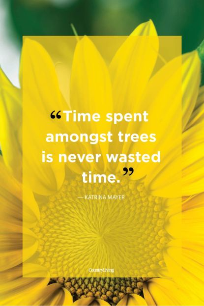 nature, quote, time, trees, Katrina Mayer