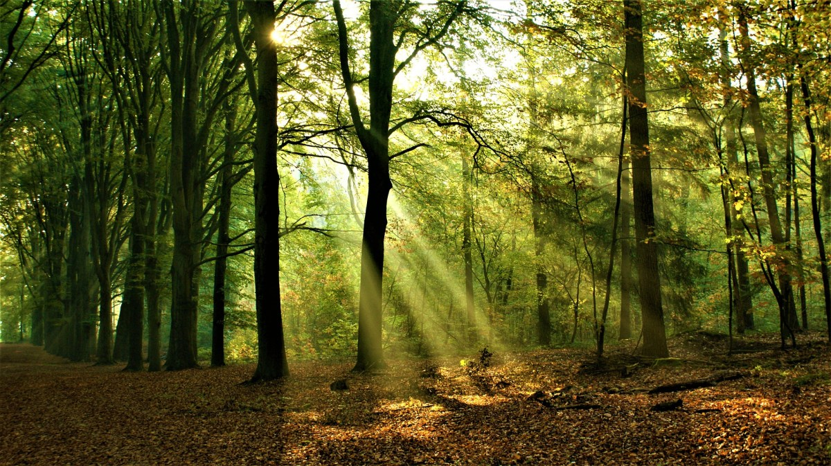 sun, light, forest, sunrise