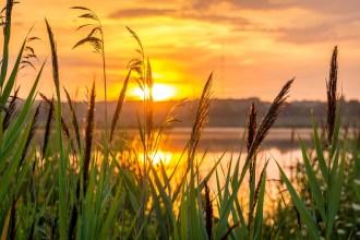 hope, sunrise, nature, morning