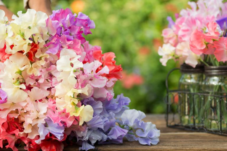sweet peas, sweet fragrance, three P's of 2020,