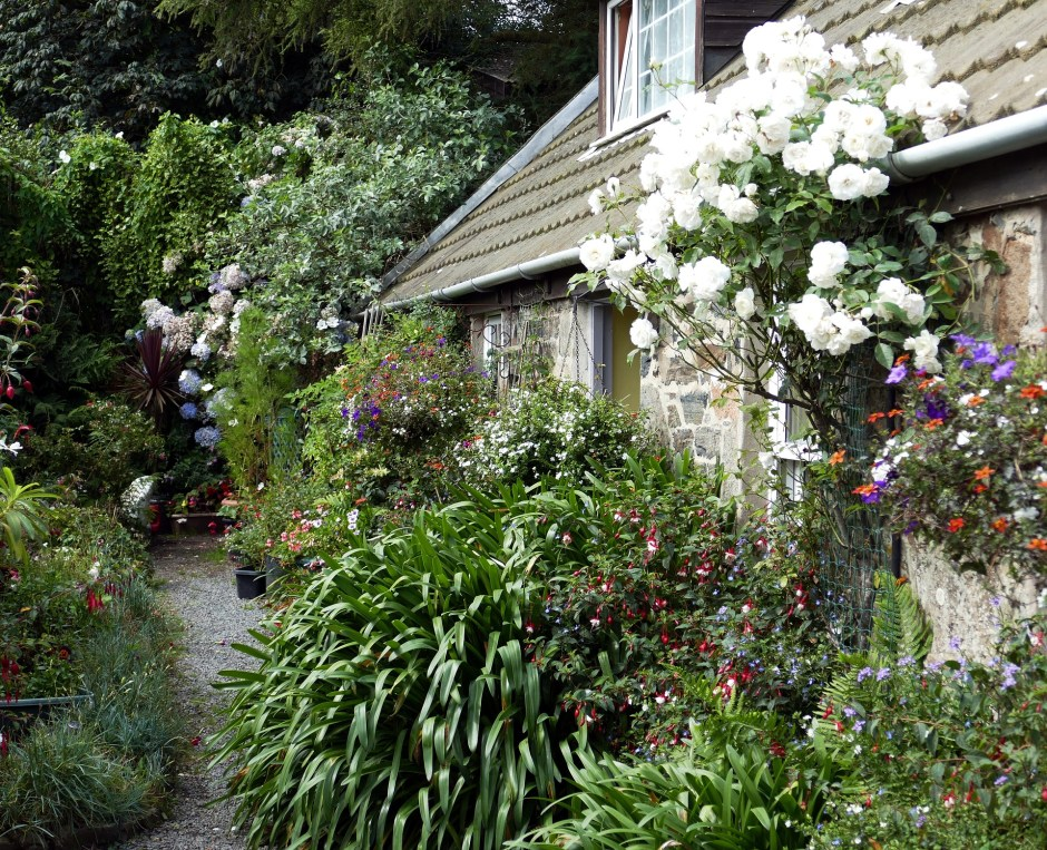 English garden, cottage garden, England, roses, flowers