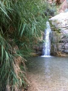 En Gedi, Israel (the oasis where David hid from Saul)