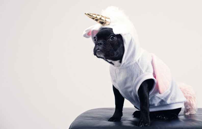 pug in a unicorn costume