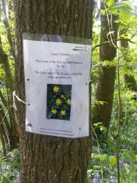 Duncliffe Bluebell Woods May 2014 (15)