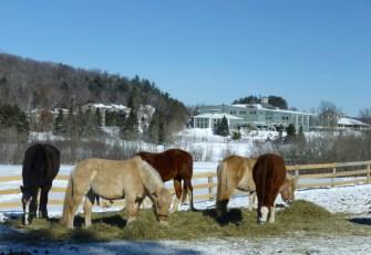 z Herd at Deerhurst 2