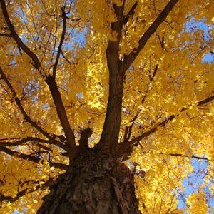 tree-84573__340
