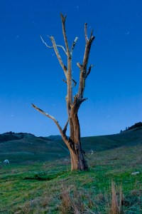 Tree No., Nicasio, CA