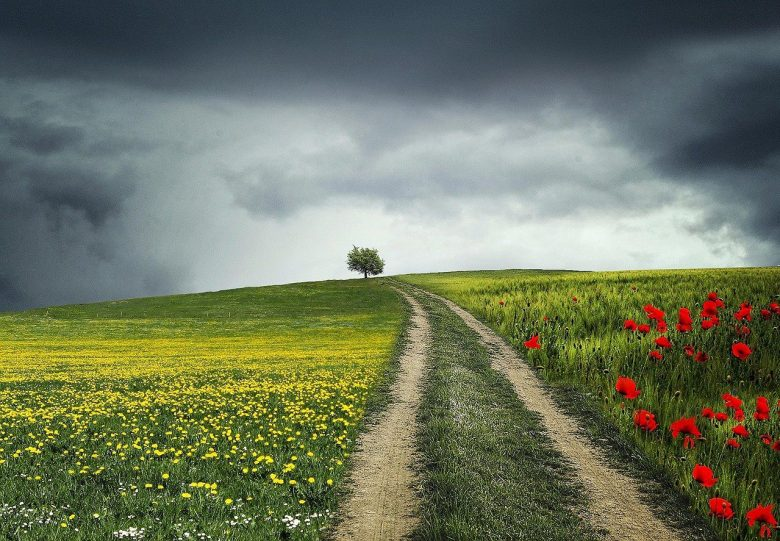 Walk Your Own Writing Path