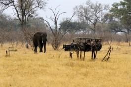 Safari truck and elephant 1