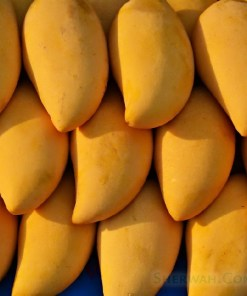 Buy Pakistani mangoes directly from the farm