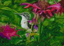 Tally's Hummingbird copy