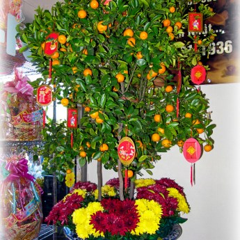 tangerines tree decorated with red envelopes for Tet