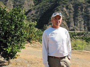 Pixie Tangerine, tangerine, grower tour, Ojai