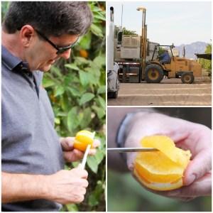 citrus farm tour, Seaview Packing, Coachella Valley
