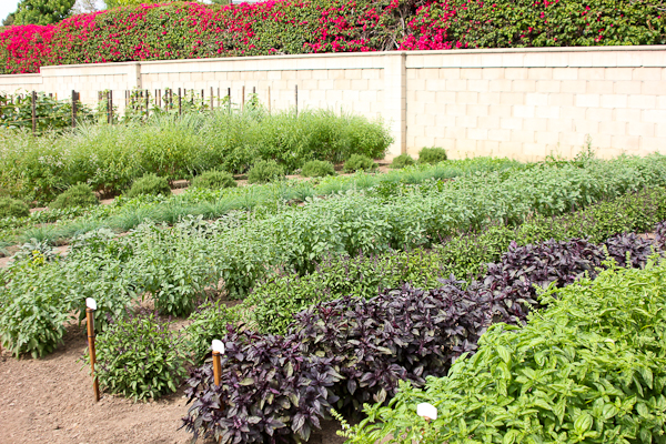 Herb Garden at Edwards Ranch Estates