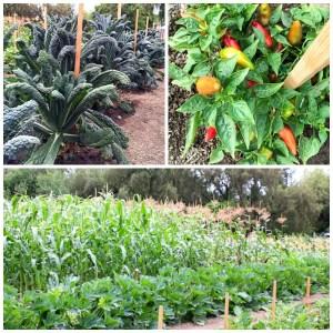 Garden at Edwards Ranch Estates