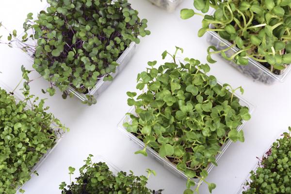 Urban Produce Vertical Growing System - micrograms