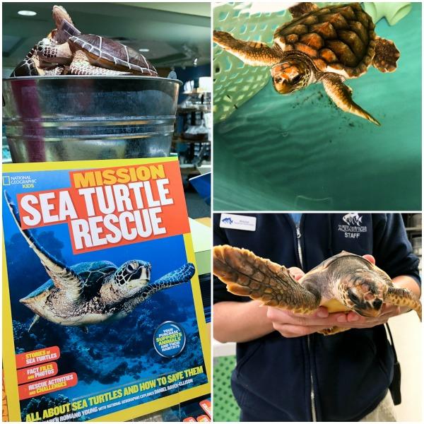 North Carolina Sea Turtle Rescue | ShesCookin.com