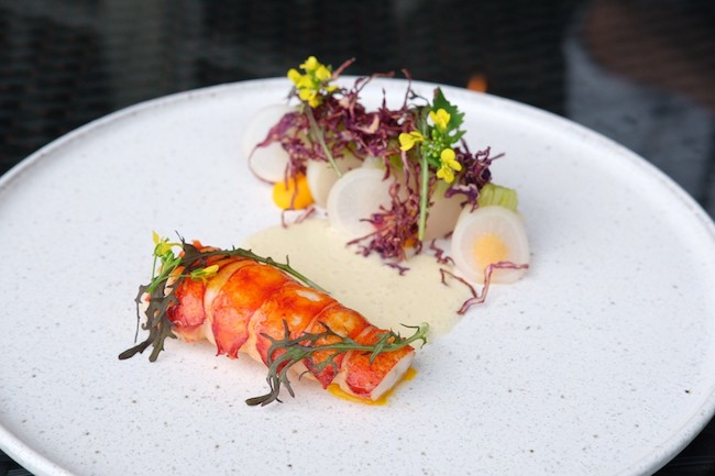 Roasted Lobster Tail on white plate   Studio at Montage Laguna Beach