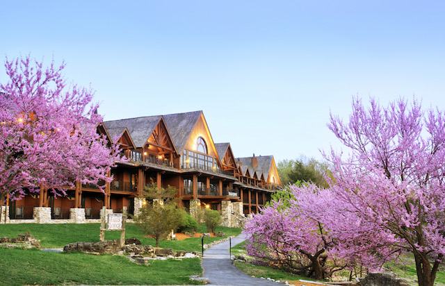 Pink Dogwood Trees at Big Cedar Lodge, Branson, Missouri