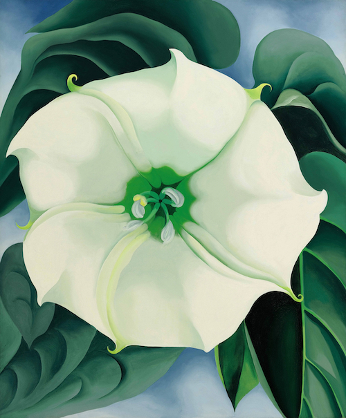 JImson  Weed White Flower by Georgia O'Keefe