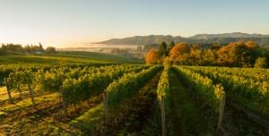 Tualatin Valley Estate, Willamette Valley, Oregon
