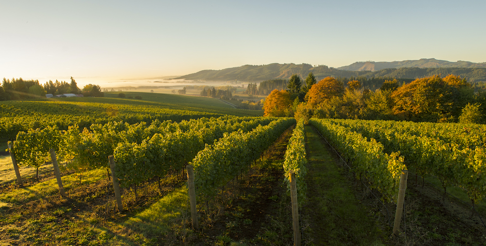 Tualatin Valley Estate, Willamette Valley, Oregon
