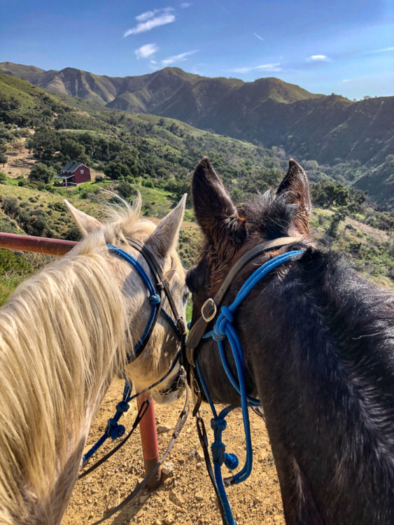 Coastal views on horseback, Circle Bar B Guest Ranch, Santa Barbara