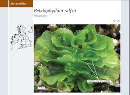 Petalwort