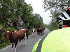 Traffic jam on the Trolstigen