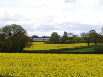 Oilseed Rape, Ledbury