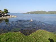 Evening dip, Isle of Skye