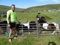 Tiny Shetland ponies, Voe Show